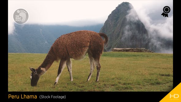 Thumbnail for Peru Lhama at Machu Picchu