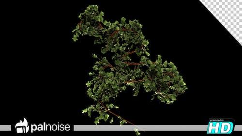 Bush Green Growth Nature