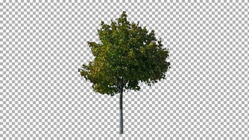 Real Tree Isolated on the Wind 16