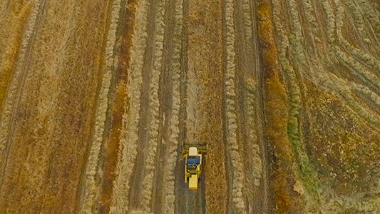 Cover Image for Wheat Harvester
