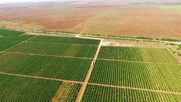 Thumbnail for Aerial View Over Standard Fruit Gardens