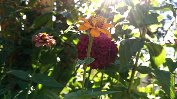 Thumbnail for Fading Summer Flower 6