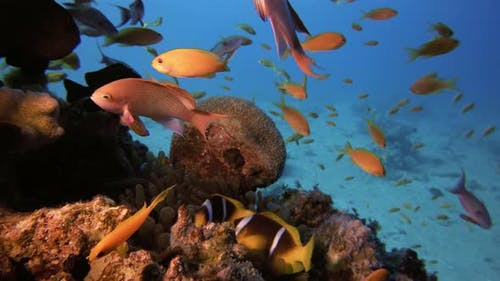 Clownfish and Colorful Fish