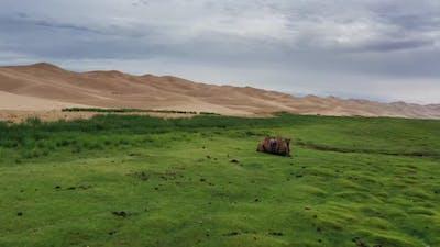 Camel and Sand Dunes in Gobi Desert