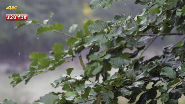 Thumbnail for Rain 1