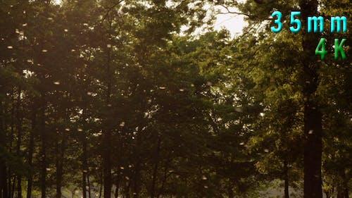 Dandelion Fluff Flying In The Forest 02