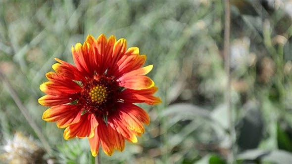 Thumbnail for Echinacea Flower Autumn