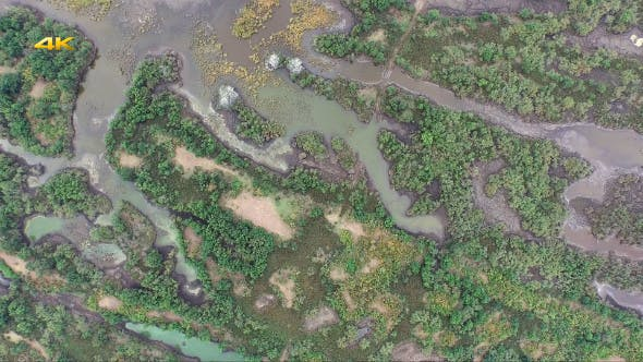 Thumbnail for Aerial Flying Over Swamp Forests