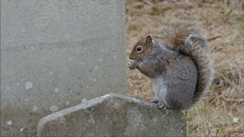 A Tiny Squirrel Munching a Peanut