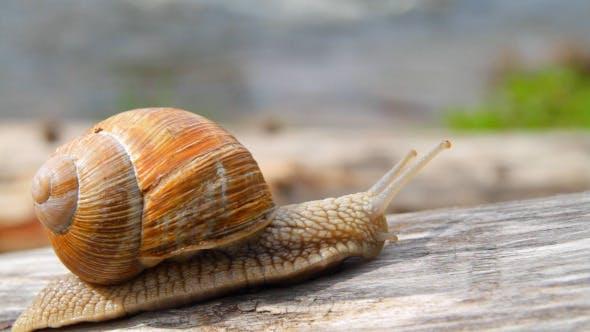 Thumbnail for Snail Crawling Up