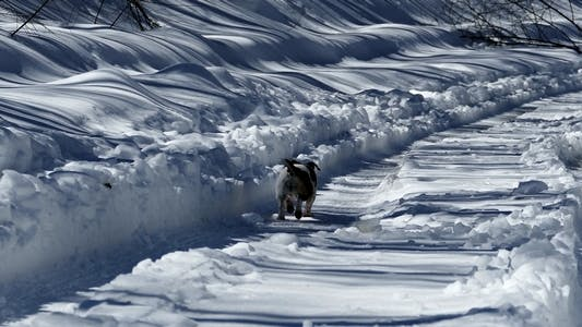 Thumbnail for Dog Running on Snowy Path 2