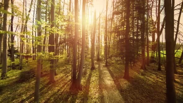 Thumbnail for Flying Through Autumn Forest Trees at Sunset Light