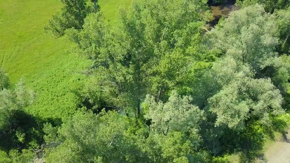 Aerial: Flying Over the Birches and a Small River in Field