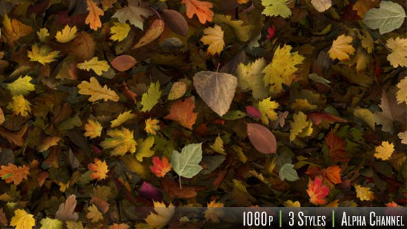 Thumbnail for Falling Leaves Fill Screen Overlay