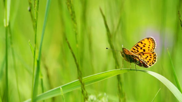 Thumbnail for Butterfly On The Grass