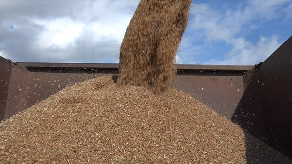 Thumbnail for Unloading Grain To The Truck 6
