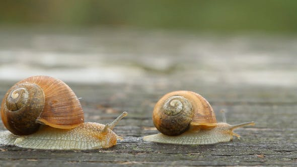Thumbnail for Snails Crawling