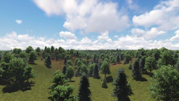 Thumbnail for Fly over Forest v2