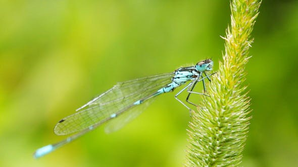 Thumbnail for Dragonfly On Grass