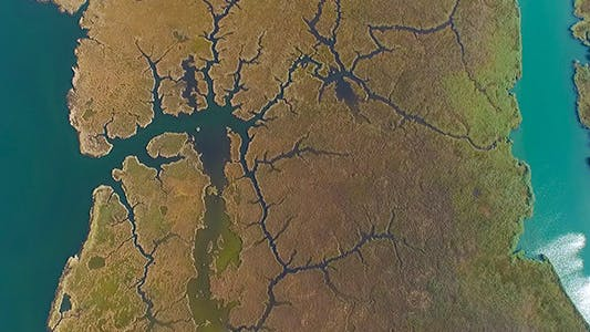 Thumbnail for Swamp River