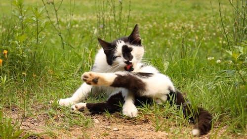 Katze wäscht Pfote