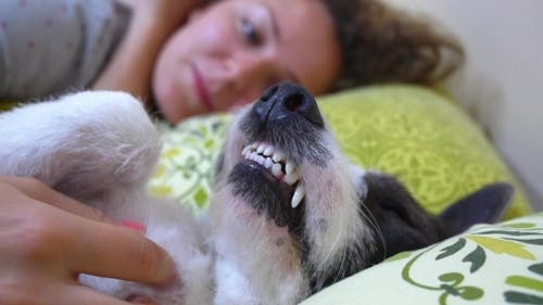 Girl And Dog Comfortably Sleeping In Bed