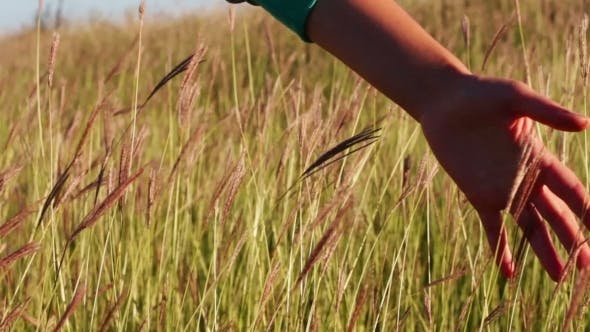Thumbnail for Girl Hand Touch The Grass In The Field Meadow.