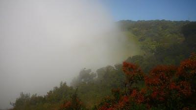Mist On Mountain