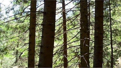 Pines 16