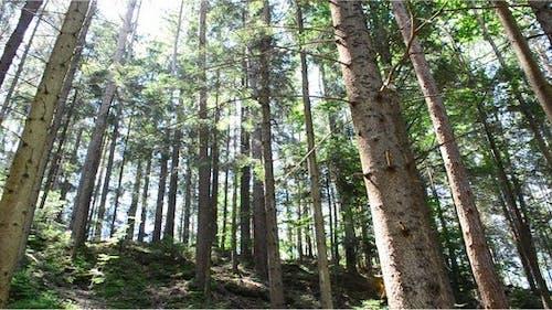 Pines 8