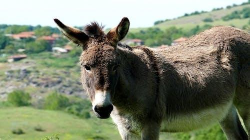 Donkey 8