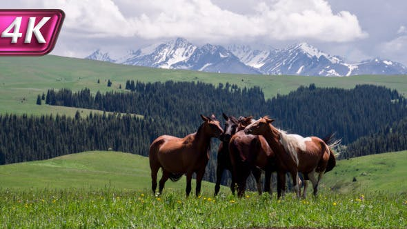 Thumbnail for Group of Horses in the Foothills