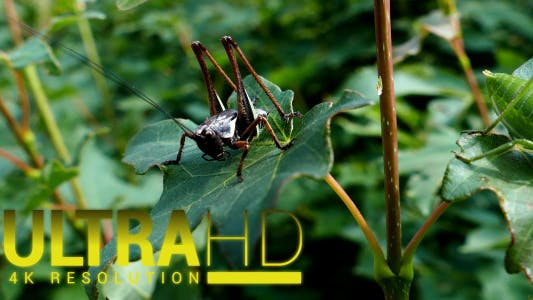 Thumbnail for Grasshopper 1