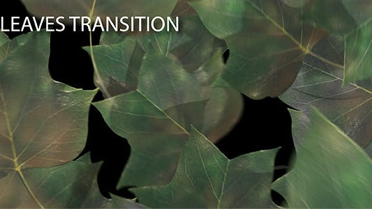 Cover Image for Leaves Transition