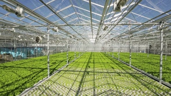 Thumbnail for Large Industrial Greenhouses. Green Beds