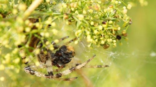 Spinne und seine Beute