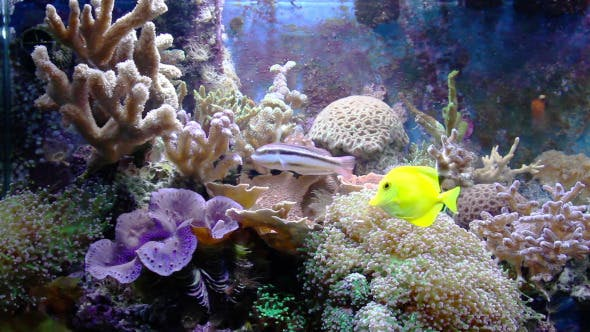Thumbnail for Aquarium With Fish And Corral