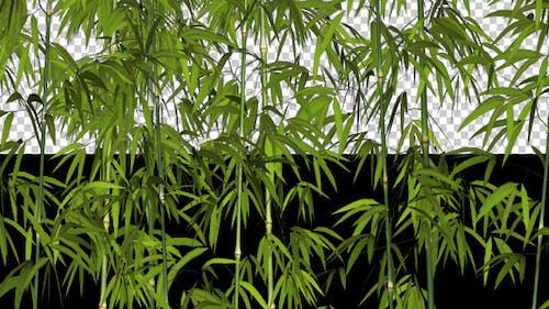 Bamboos - Windy Shrubs