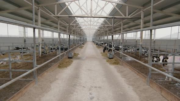Innenraum der Milchfarm