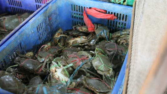 Cover Image for Selling crabs