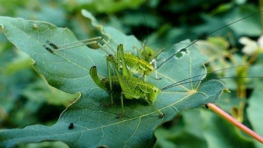Thumbnail for Grasshoppers 1
