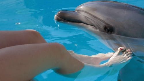 Young Girl Petting Bottlenose Dolphin