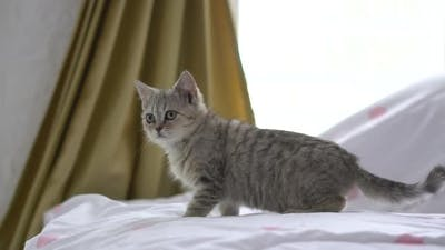 Close Up Kitten Standing On A Bed