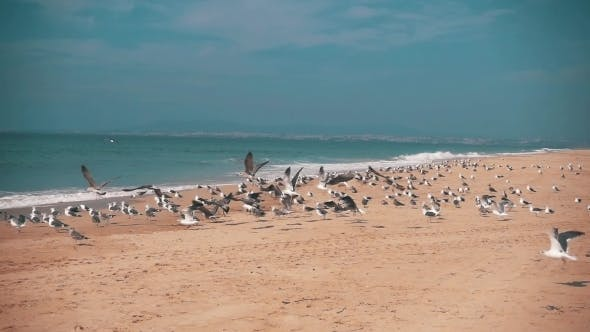 Thumbnail for Seagulls Make Takeoff From The Ocean Beach