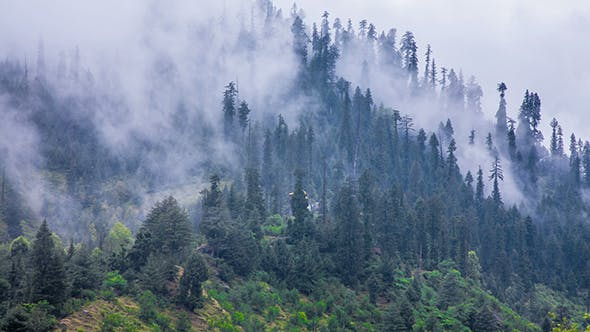 Cover Image for Fog In Forest