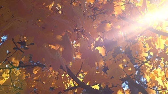 Thumbnail for Leaves and Sun Beam