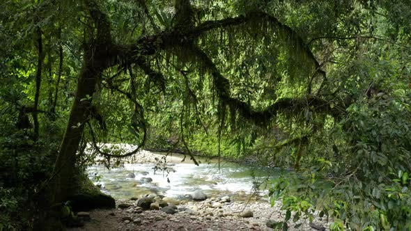 A small waterfall in a tropical paradise is being revealed between the branches