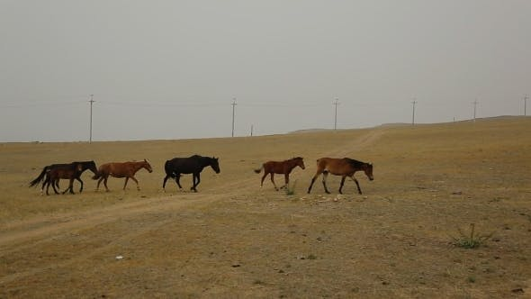 Thumbnail for Wild Horses Graze Different Breeds In The Steppe