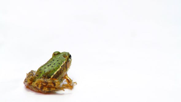 Thumbnail for Little Frog Sitting Then Jumps