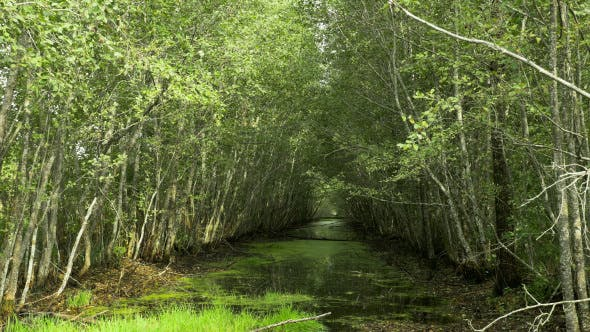 Thumbnail for Swamp River in the National Reserve